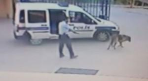 polis_kopek_cinayet
