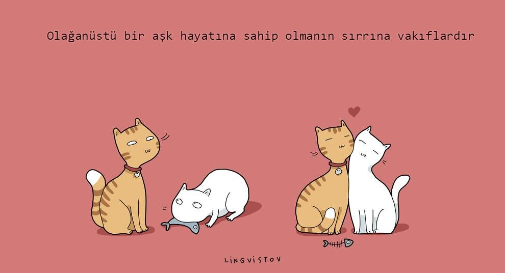 kedilerle-yaşamak-patiliyo-11