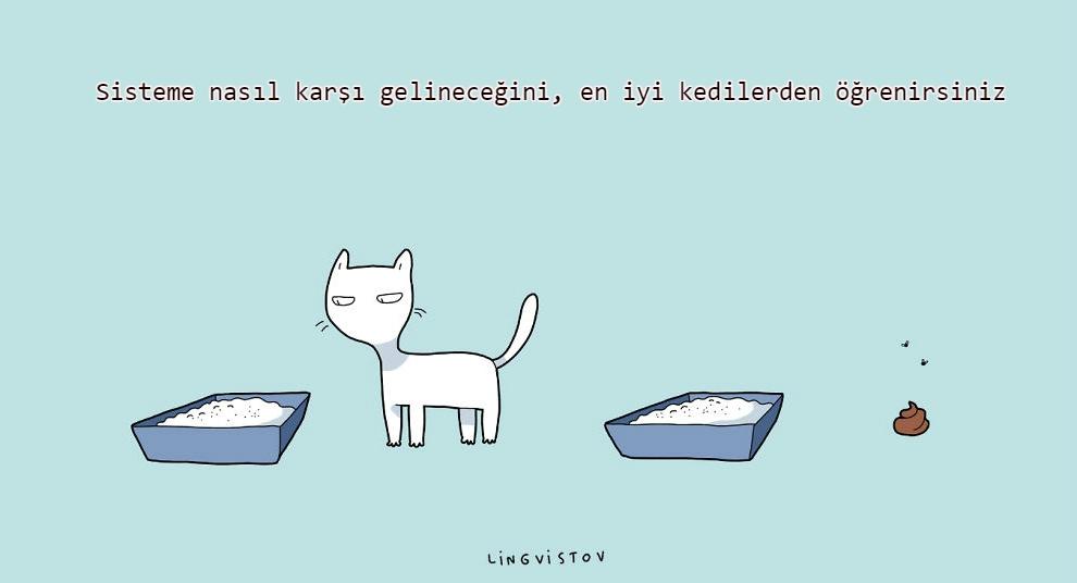 kedilerle-yaşamak-patiliyo-13